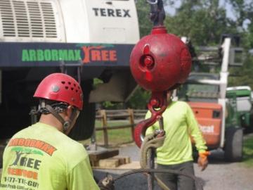 Crane-ball-tree-service---Copy