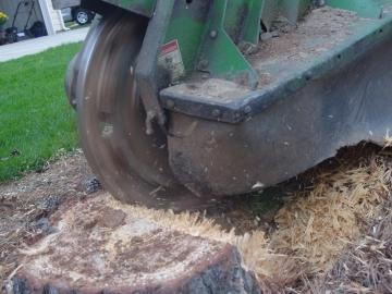 stump-grinding-3