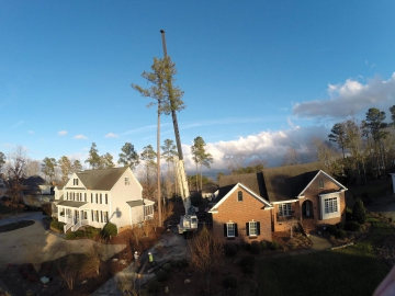 tree-service-raleigh-88