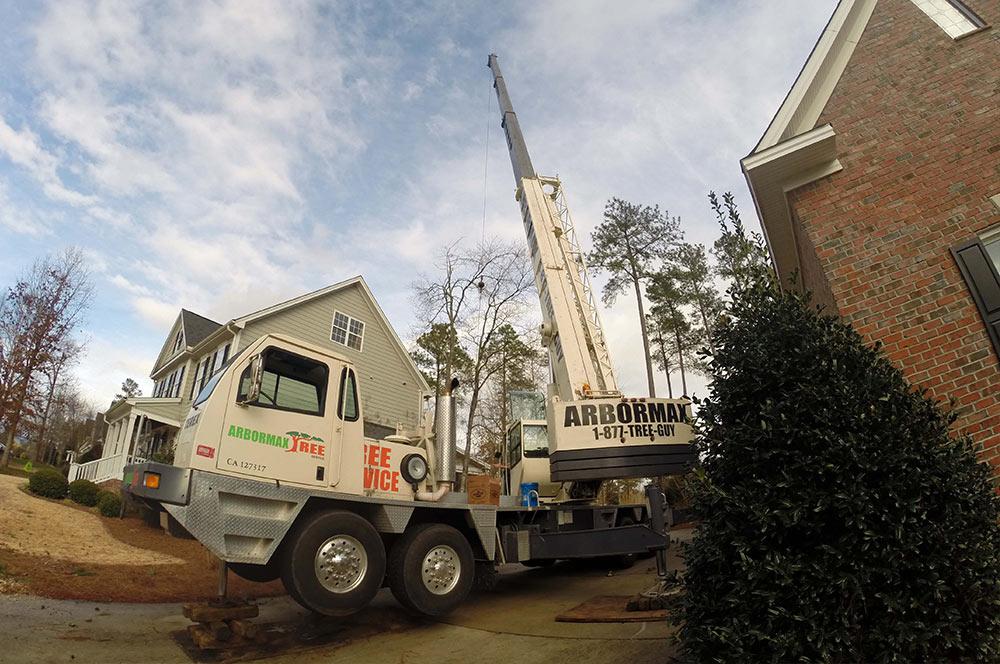Crane-ball-tree-service