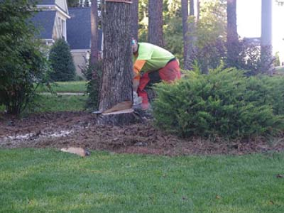 step3-tree-removal