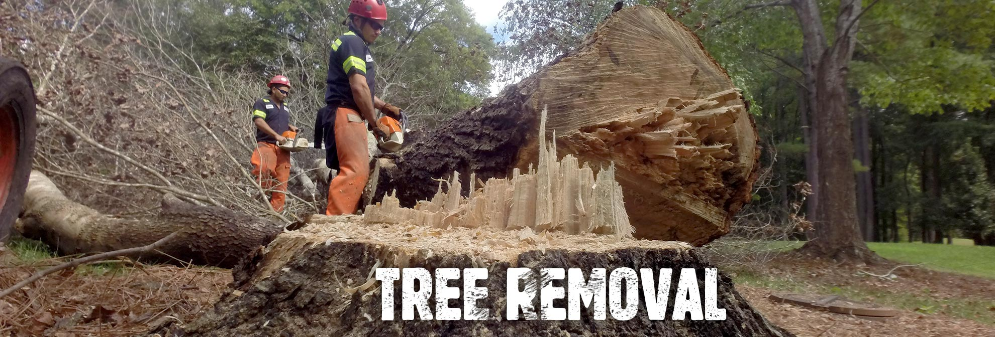 Tree Removal Arbormax Tree Service