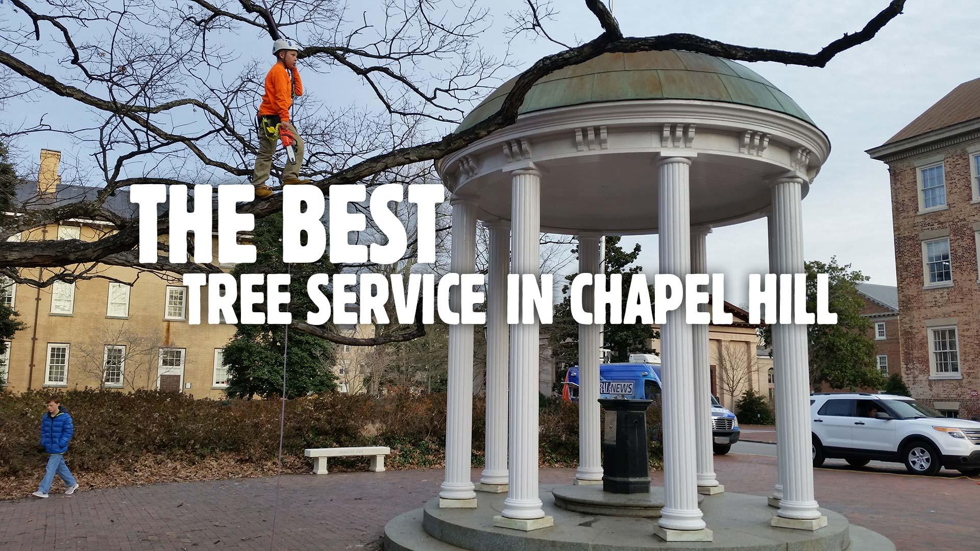 Chapel Hill Tree Service