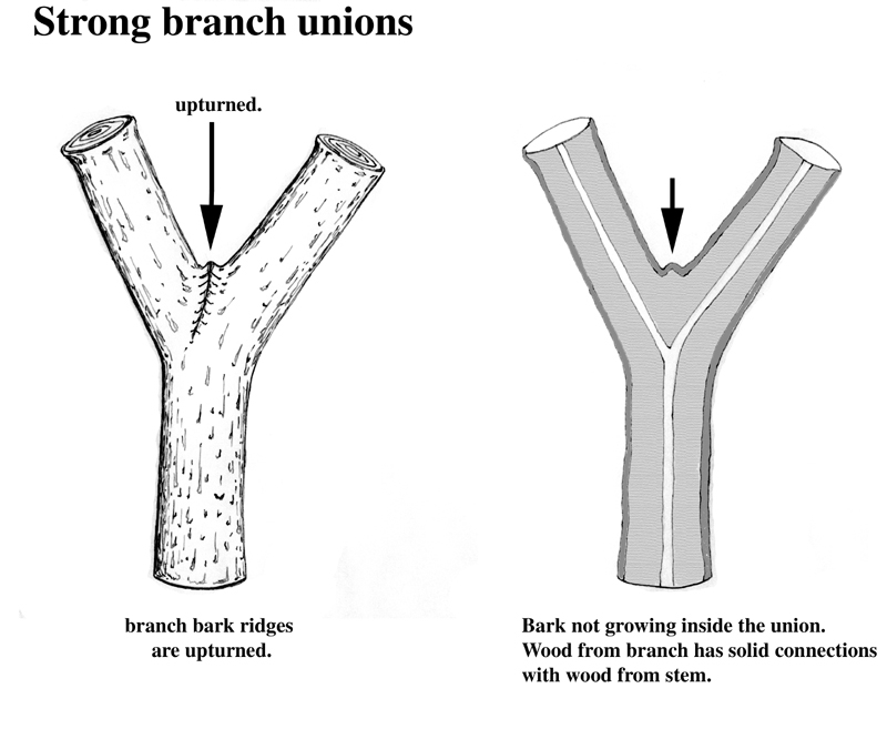 branch bark ridge 2-1