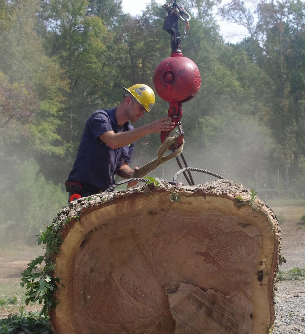 Big-log-after-tree-removal-in-raleigh