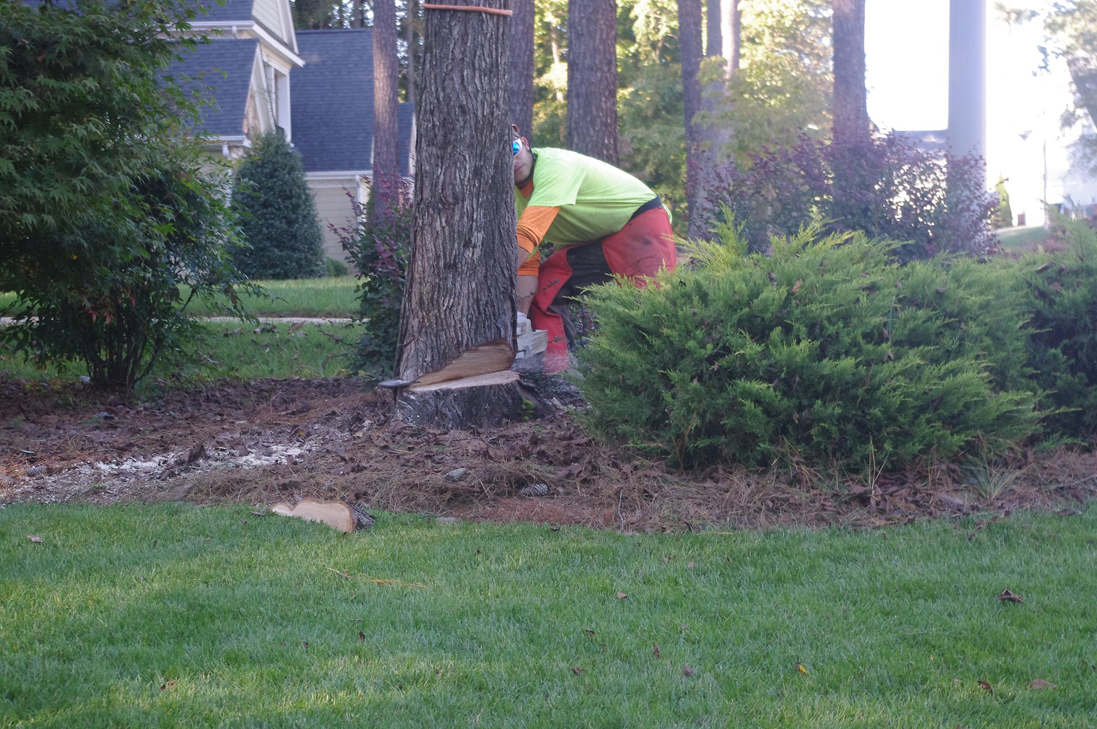 backcut-removing-a-tree-in-raleigh
