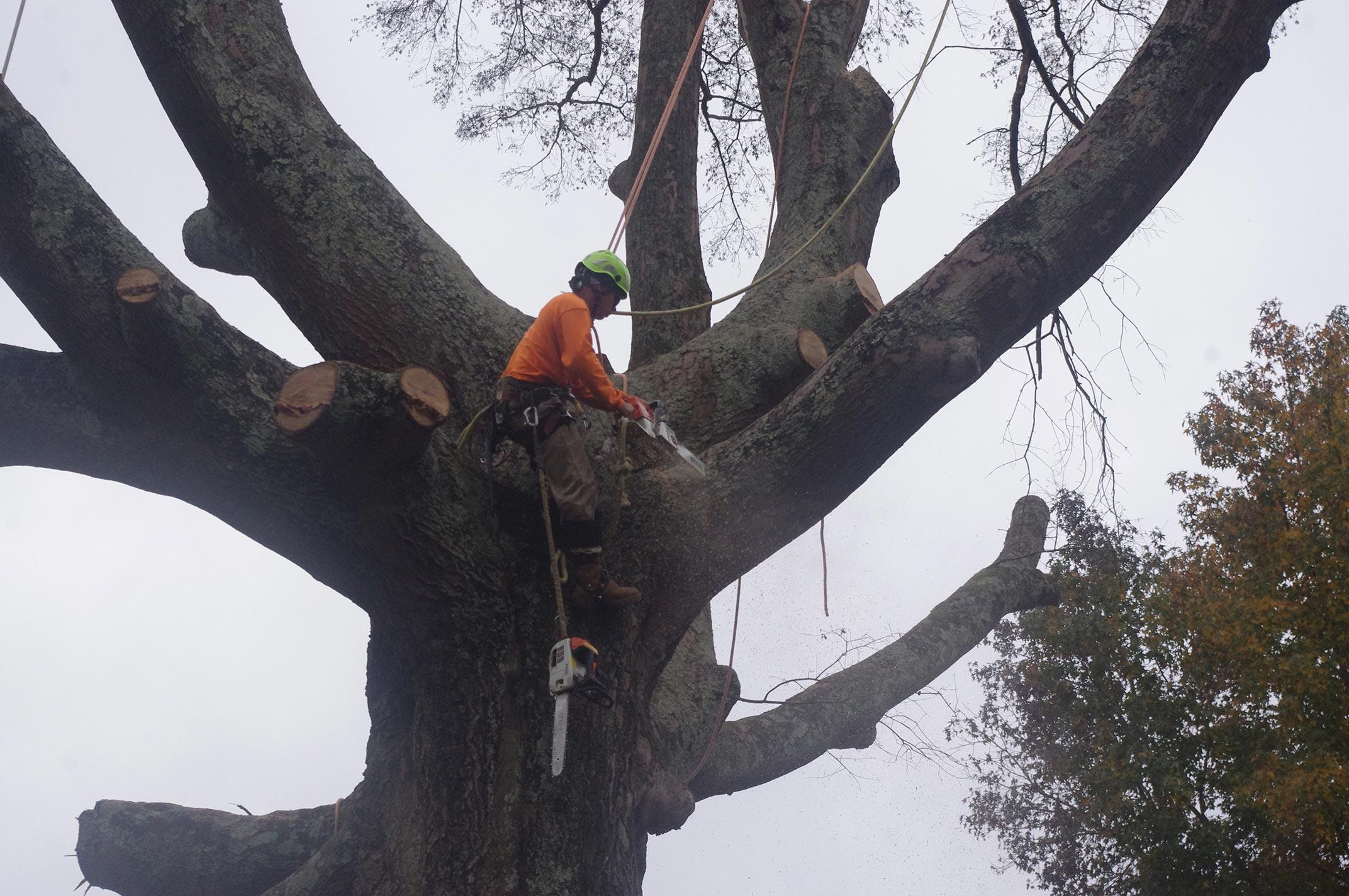#big-oak