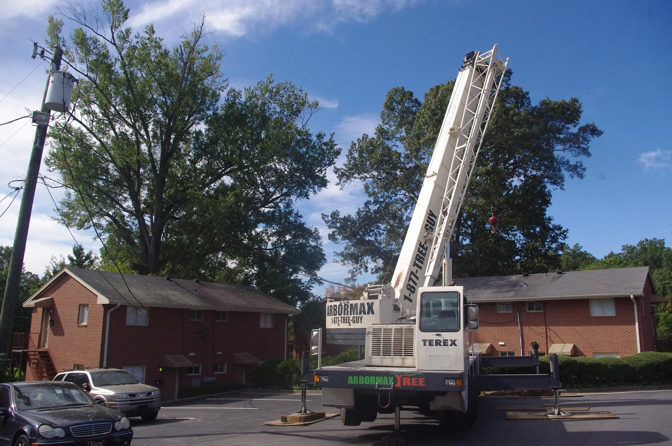 #crane-tree-removal3