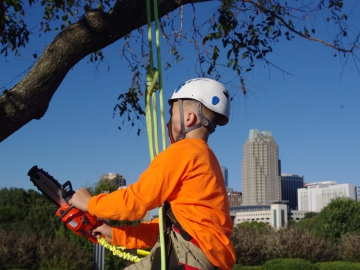 Raleigh-tree-service-24