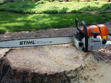 chainsaw-on-stump
