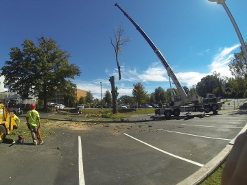 #crane-tree-removal-13