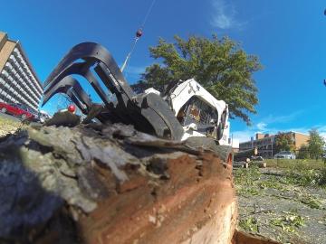 #crane-tree-removal-15