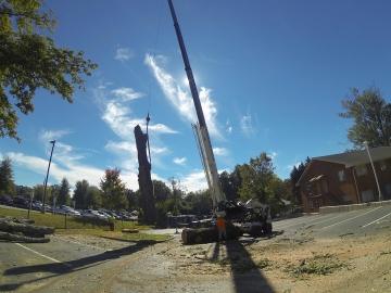 #crane-tree-removal-16