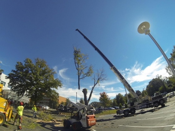 #crane-tree-removal-8