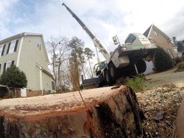 raleigh-tree-service-65---Copy