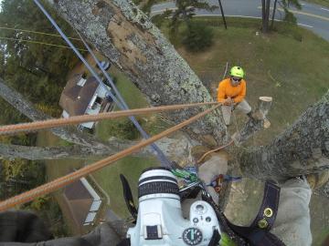 #tree-climber