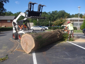 #tree-removal-raleigh6