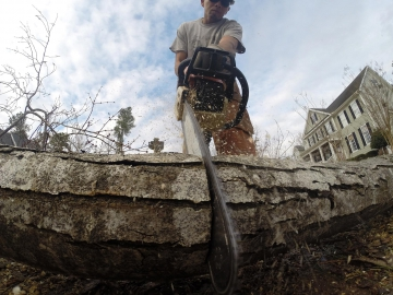 tree-service-raleigh-81