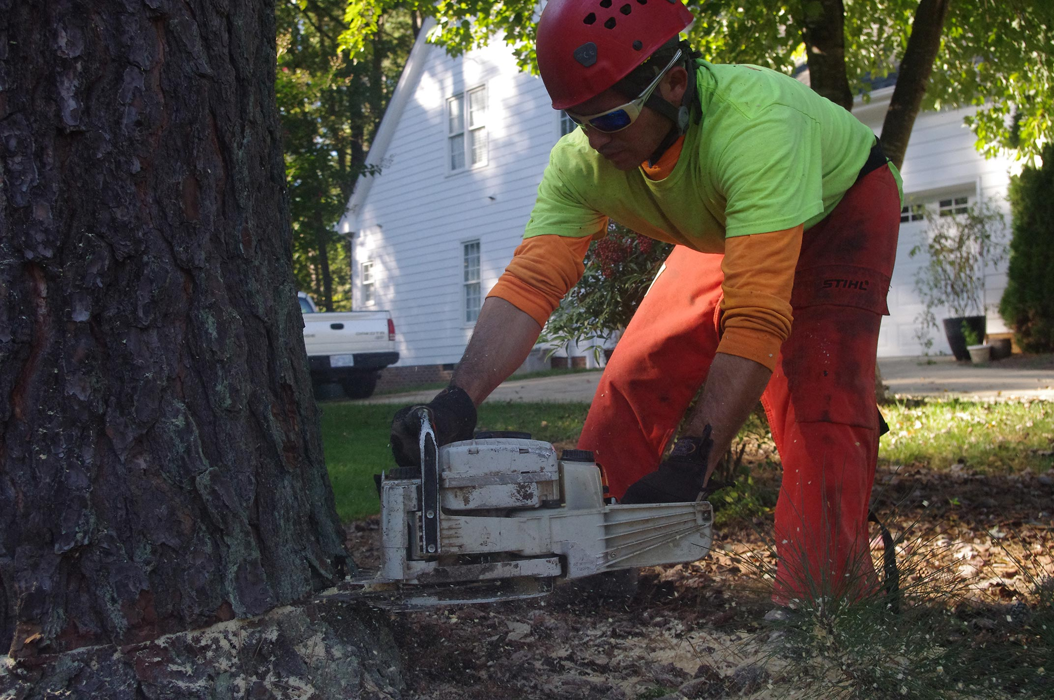tree-removal-raleigh-104
