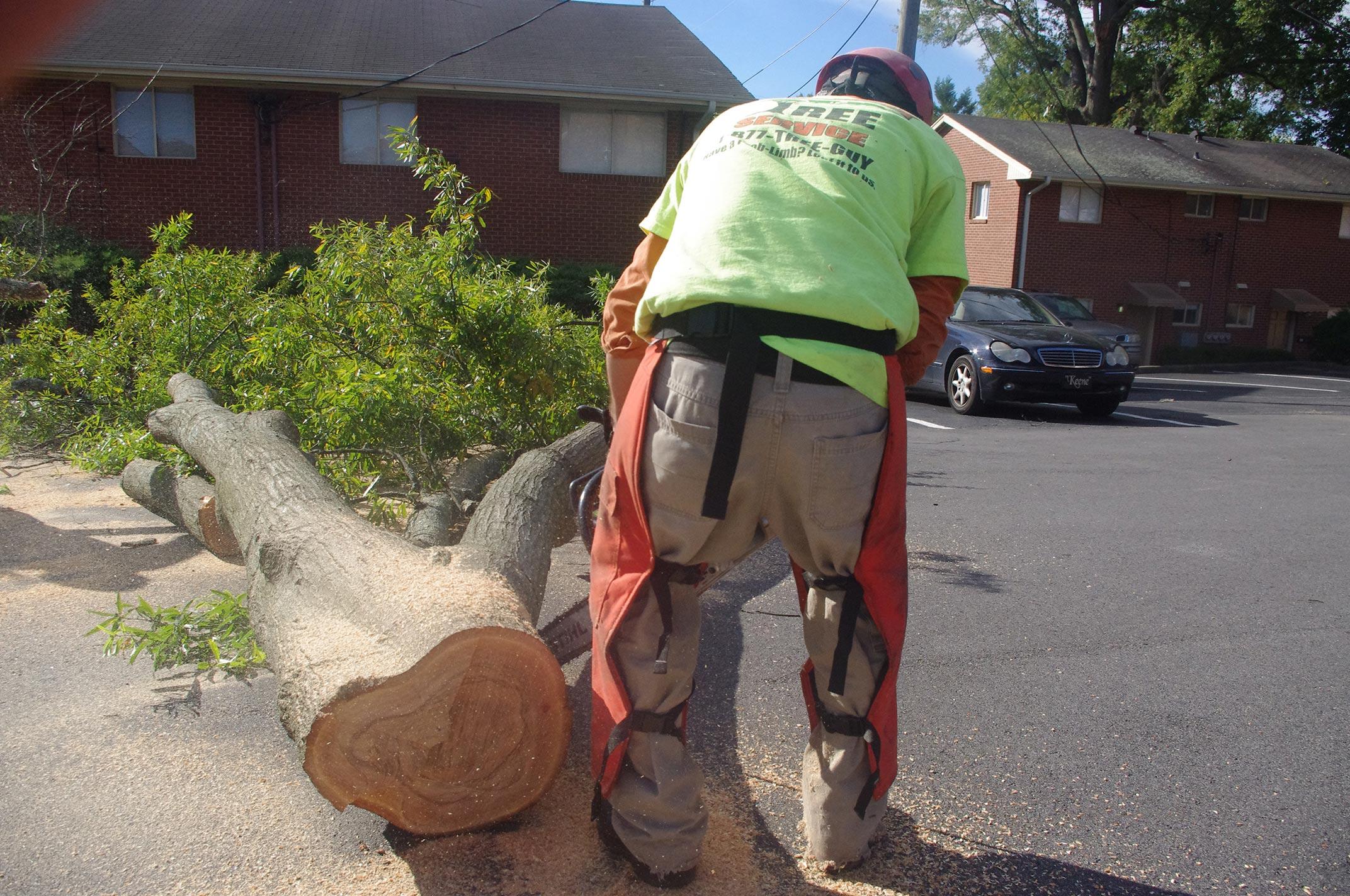 #tree-service-raleigh-ground-crew2