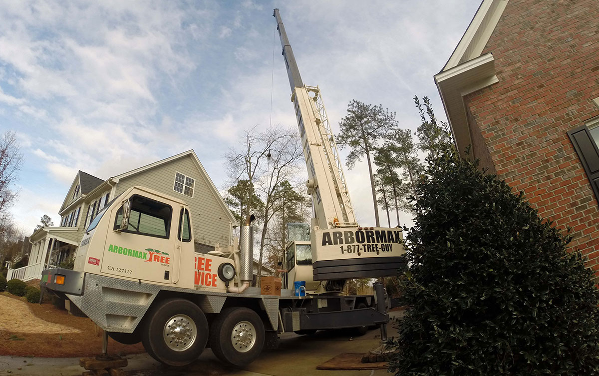 Raleigh Tree Service