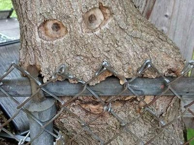 tree-service1