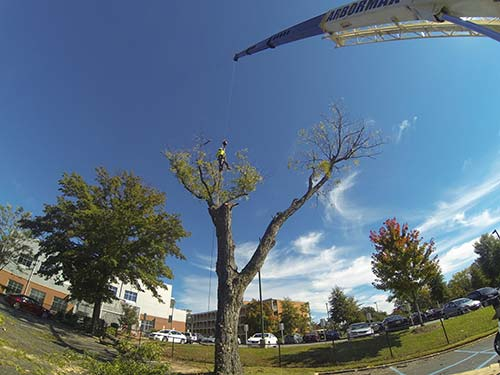 crane-tree-removal