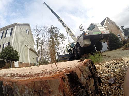 raleigh-tree-service-65