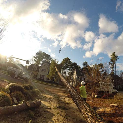 tree-service-raleigh