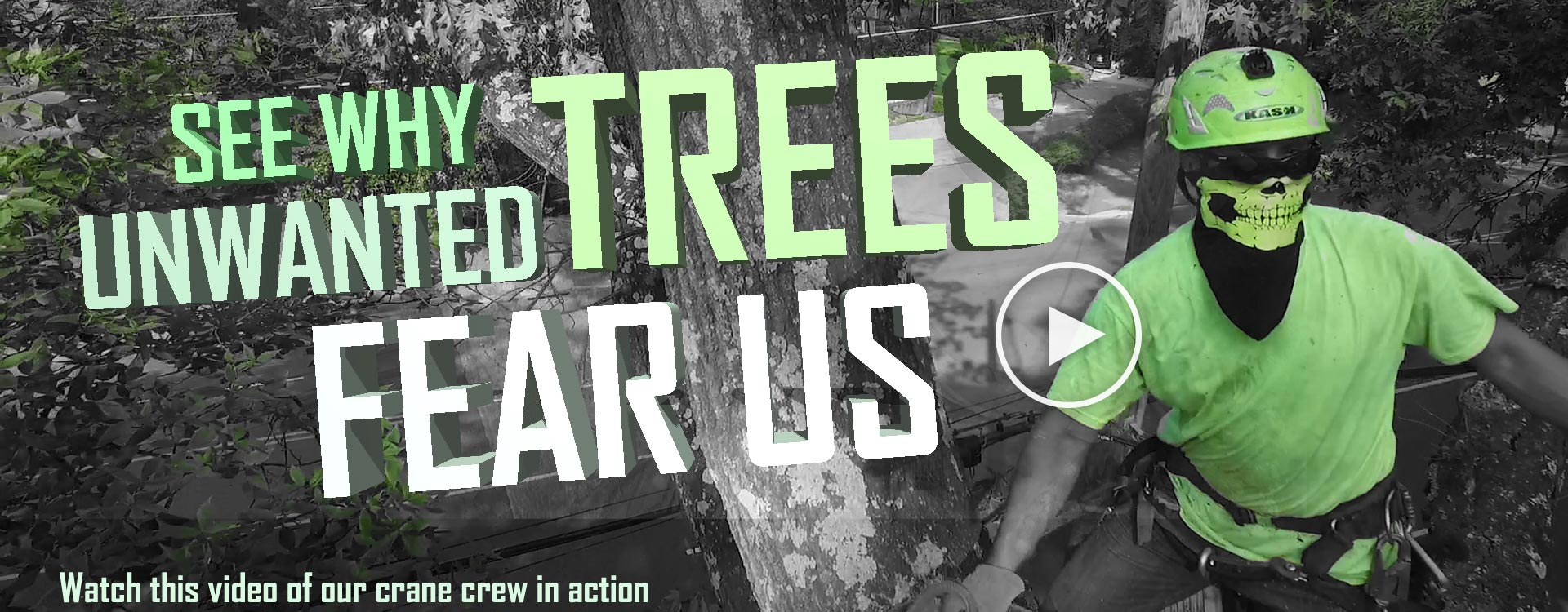 SEE-WHY-unwanted-trees-fear-us