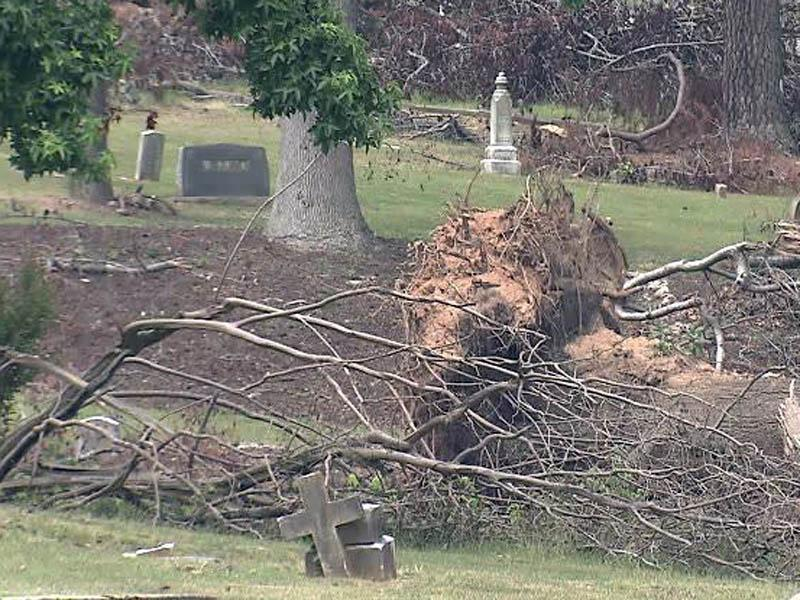 historic cemetery tree removal