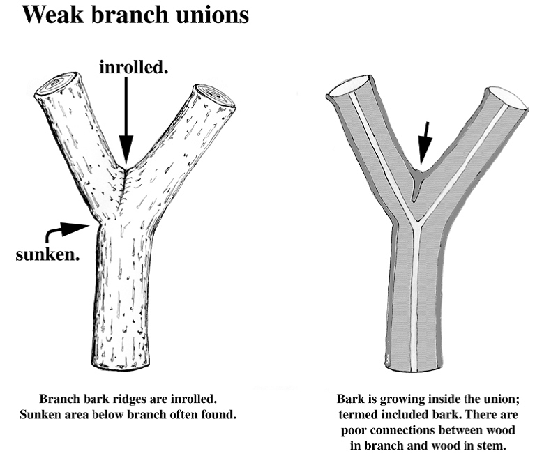 branch bark ridge 1-1