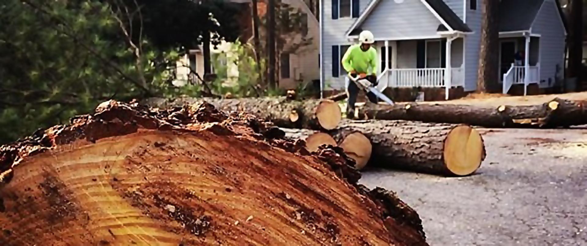 logs in street arbormax tree service