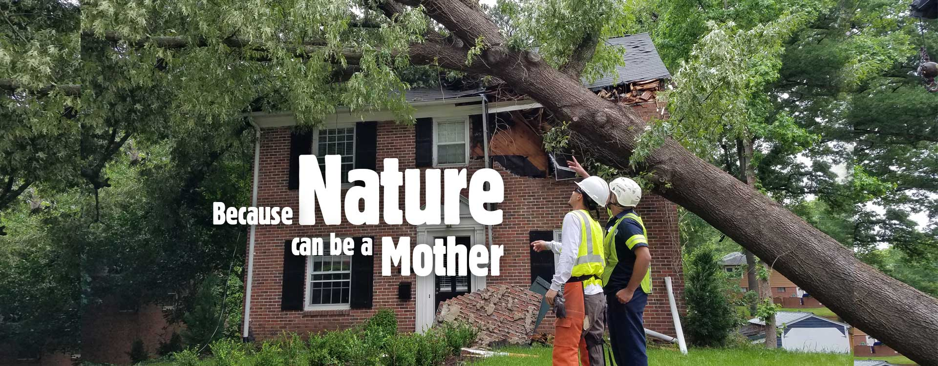 Raleigh Emergency Tree Removal